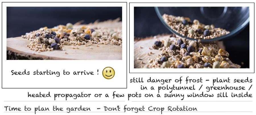 seeds arriving